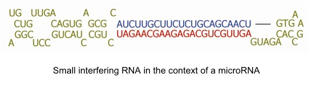 small-interfering-rna